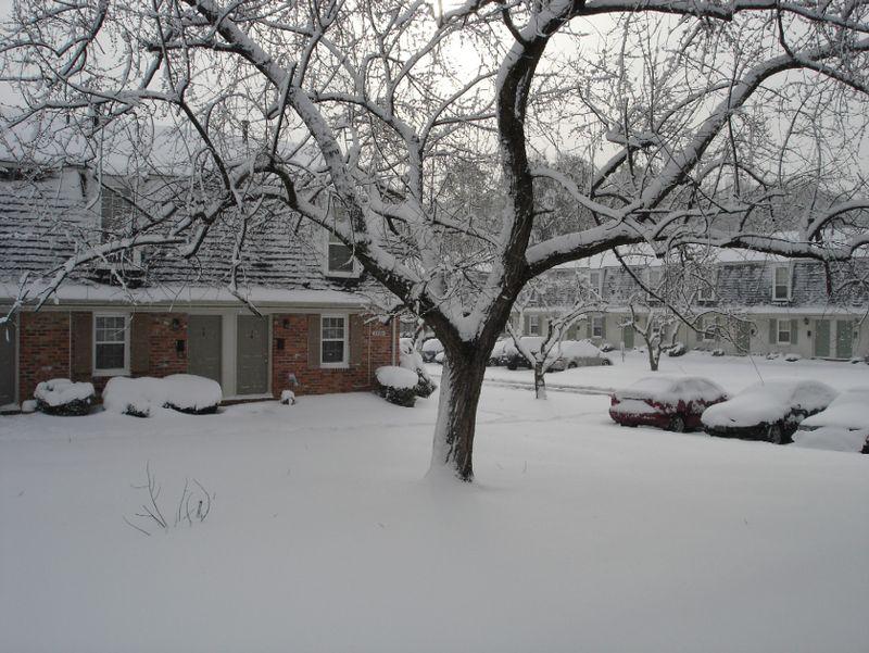 Frontyard1